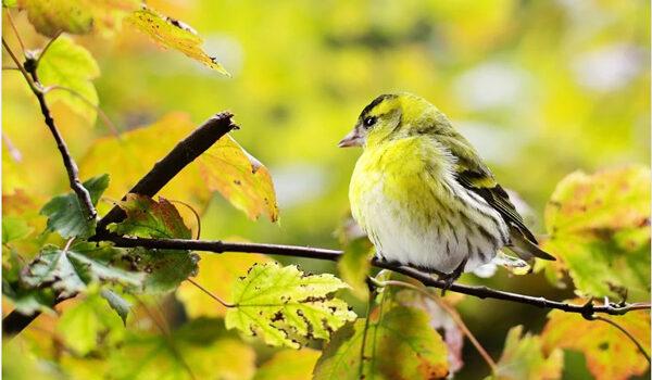 Peluang Bisnis Ternak Burung