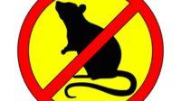 Aplikasi suara pengusir tikus